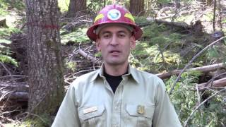 A Day in my Boots: Forestry