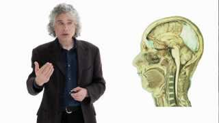 Linguistics as a Window to Understanding the Brain